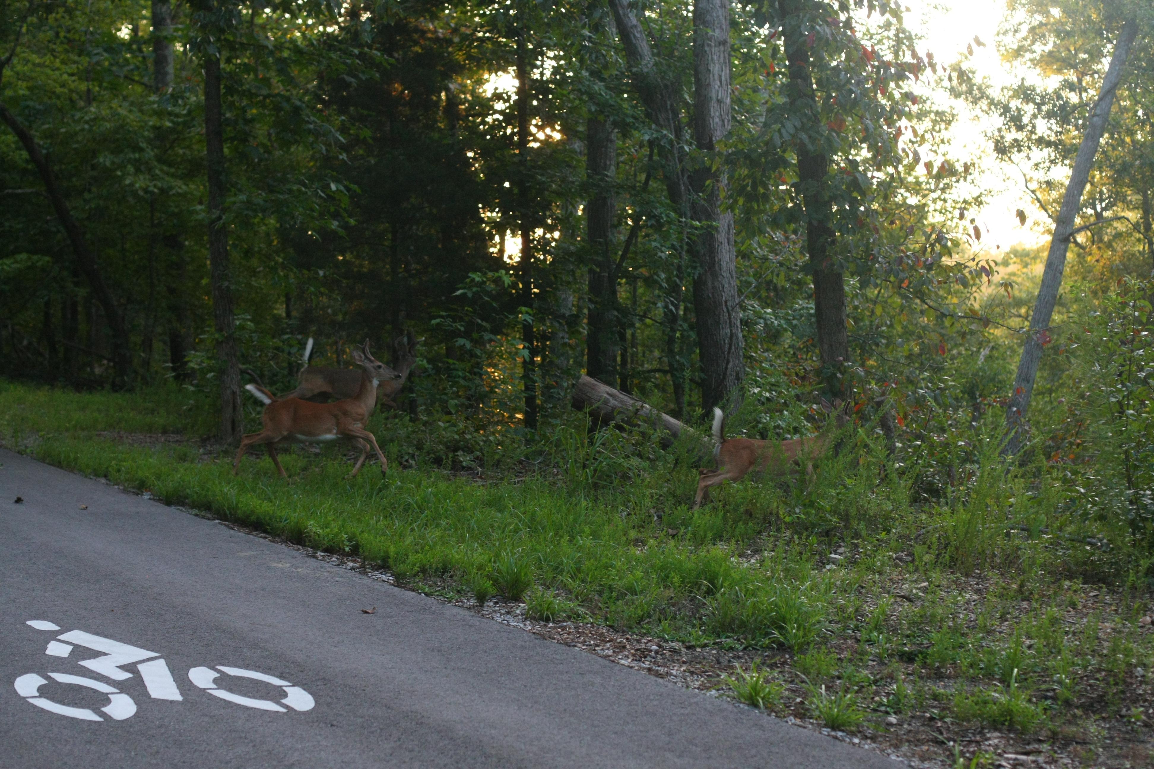 Still Hollow Half Marathon & 10K - Wild Trails Race Series - Chattanooga, TN - Enterprise South